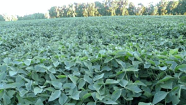 大豆、米中貿易に潜む臆測 漂う米産の終着点は中国か