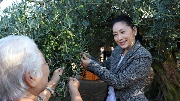歌手の石川さゆりさん、小豆島でオリーブ収穫