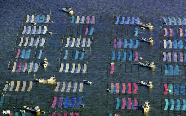 海面に広がったカラフルなノリ網(25日)=共同