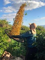 ブラジルのレアル相場がコーヒー価格に与える影響は大きい