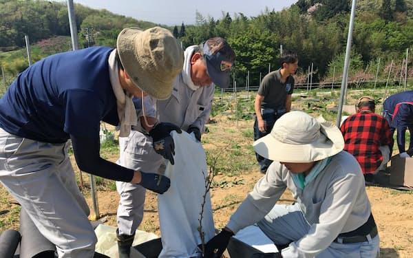 苗木の定植にも地域の農業者や若者ら多くの人が参加した