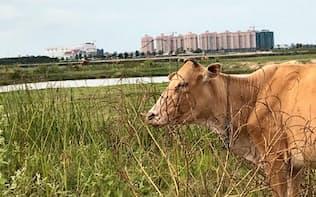 ラオス・ビエンチャン市の中心部から車で15分のこの土地も2020年にかけて108戸の戸建てが計画されている