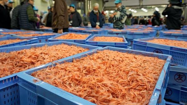 静岡のサクラエビ秋漁、11月は中止 資源回復を優先