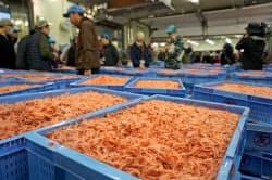 サクラエビの秋漁は延期が続いている(写真は4月の春漁の様子、静岡市の由比漁港)