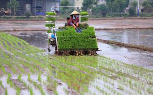 中国は主要穀物の国内自給の旗を降ろしていない(湖南省で)=ロイター