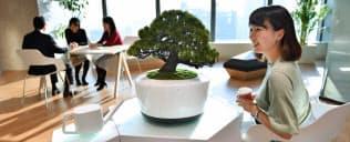 人工知能を搭載した盆栽は仕事や恋愛などの相談に乗ってくれる。センサー内蔵で、土が乾くと水をねだる(東京都中央区)=伊藤航撮影