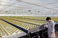 京東集団が稼働した三菱ケミカルの植物工場は安全、安心の野菜生産を進める(6日、北京市)