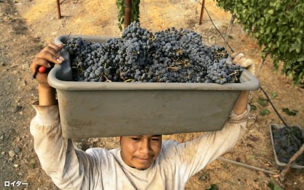 米カリフォルニアのワイン畑=ロイター