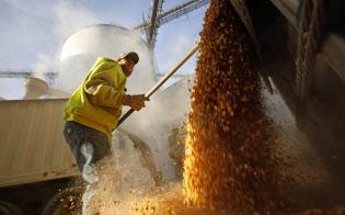米国の農家は収穫作物の貯蔵コスト上昇に悩んでいる(貯蔵庫からトウモロコシを取り出すイリノイ州の農家)=ロイター