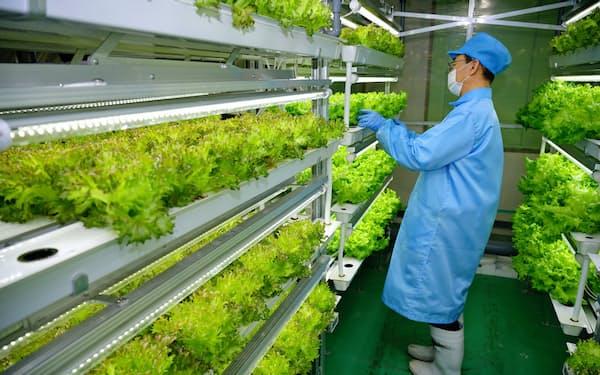 ITファーム研究所では、自社システムを使って野菜を育てる。