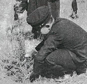 ヒノキを植樹する皇太子時代の天皇陛下(1947年4月4日、東京・八王子市の浅川林業試験場)=国土緑化推進委員会『国土緑化20年の歩み』より抜粋