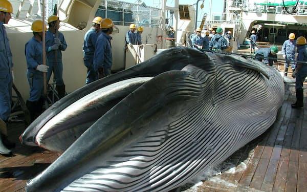 脱退によって日本の領海や排他的経済水域(EEZ)での商業捕鯨に道が開ける=日本鯨類研究所提供