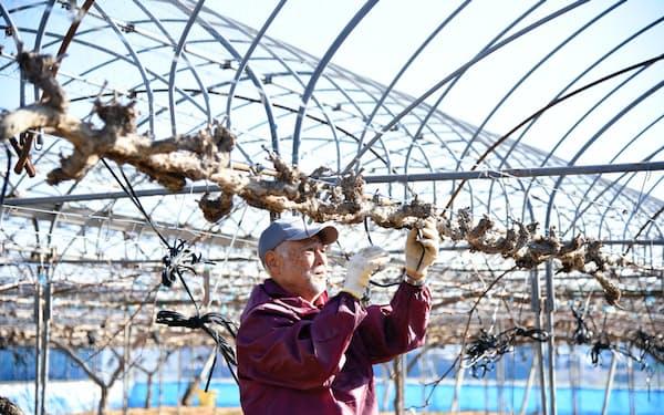 傷んだ木の植え替え準備を進める武本さん(4日、岡山県倉敷市真備町地区)