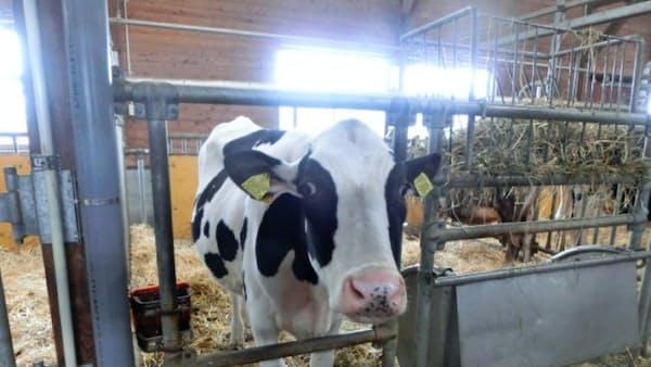 加工用乳価据え置き 19年度、TPPで輸入品警戒