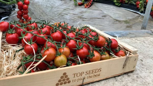 三井物産、種子ビジネスで「種まき」