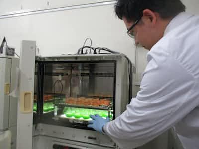微生物で「抗体医薬」安く 生産コスト10分の1に