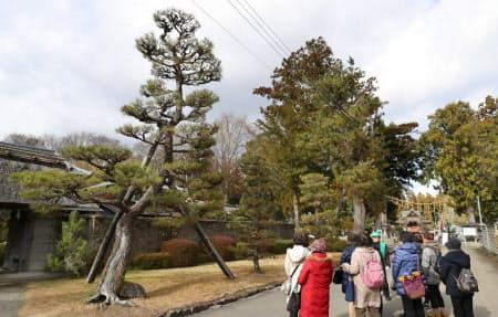 蒲生氏郷ゆかりの若松の森跡。「会津若松」の地名の由来になった(滋賀県日野町)