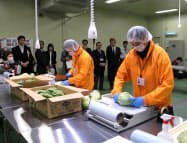 カスミみらい野菜センターで作業をする従業員(24日、茨城県土浦市)