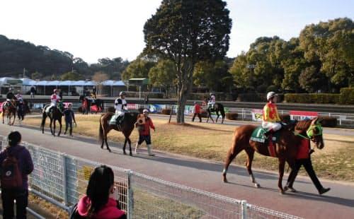 全日本新人王争覇戦第1戦のパドック。コースでは騎手も馬も器用さが求められる