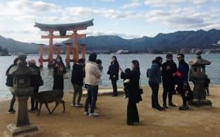 宮島の8日の観光客は半分近くが中国系を中心とした外国人が占めていた