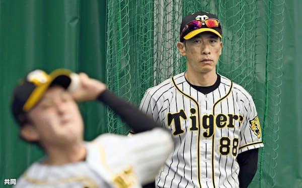 矢野監督は捕手の視点で投手陣に目を光らせる=共同
