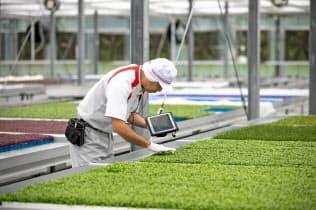 村上農園は生産拠点の新設を進めている(山梨県北杜市)