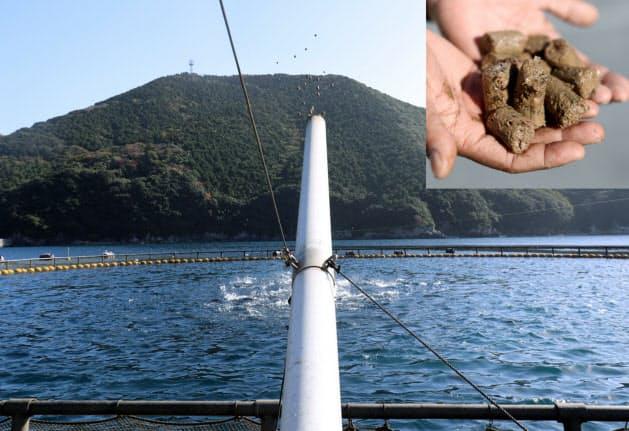 船上のパイプから送風機で配合飼料(写真右上)をまく(愛媛県愛南町)