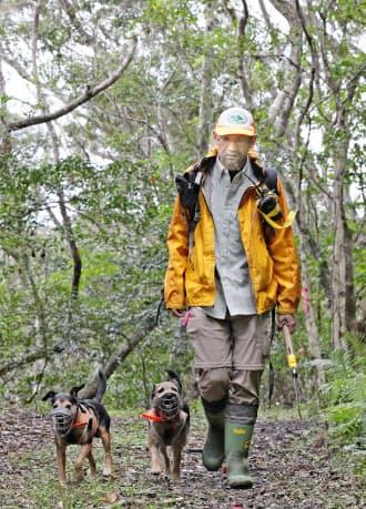 探索犬を使ってマングースを探すマングースバスターズの山下亮さん(鹿児島県龍郷町)