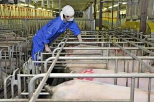 高い生産性を実現した養豚のノウハウを和牛でも活用(山形県金山町の自社農場)