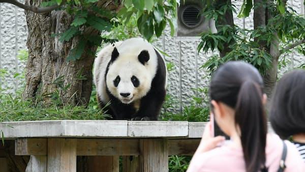 仙台市、パンダ誘致の取り組み加速 経済効果47億円