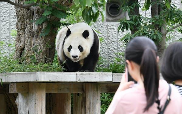 神戸市立王子動物園で飼育されているジャイアントパンダの「タンタン(旦旦)」(神戸市灘区)