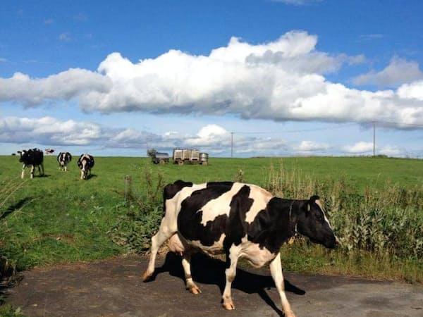 北海道では牧草不足の影響で生産量が伸び悩む