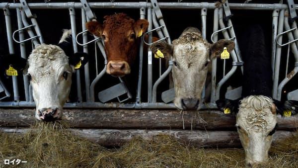 「英合意なき離脱」を危ぶむアイルランド食品産業