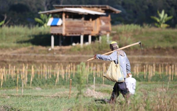 地方の農民層は経済回復の実感が乏しい(タイ北部チェンマイ、1月)=三村幸作撮影