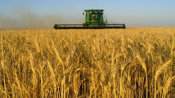 小麦、米国で作付け減止まらず ロシアが需要奪う