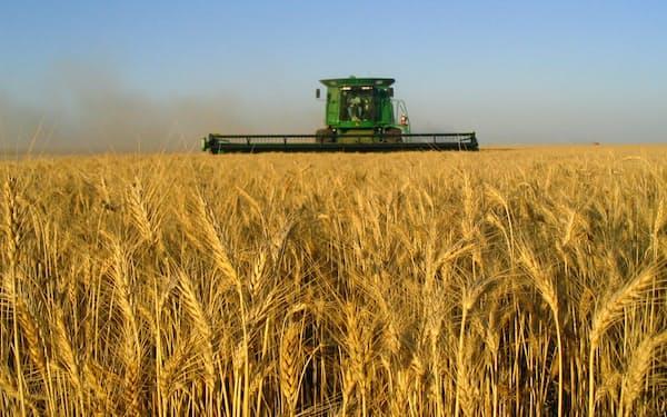 米国では生産者の「小麦離れ」が進む