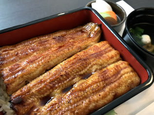 ウナギの稚魚の値上がりで、かば焼きやうな重などの店頭価格が上昇する可能性がある