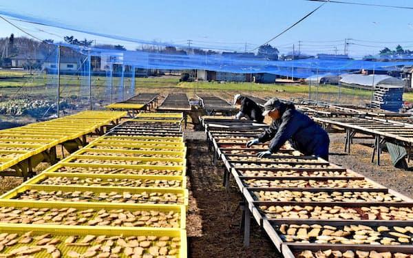 干し芋を天日干しする生産者。冬の風が甘みを増すとされる(茨城県ひたちなか市)