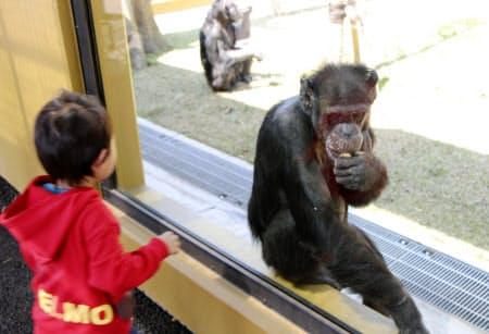 宮崎市フェニックス自然動物園でリニューアルオープンしたチンパンジー舎(24日)=共同