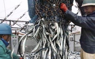 大型船からサンマを水揚げする漁業関係者(29日、北海道根室市)=共同