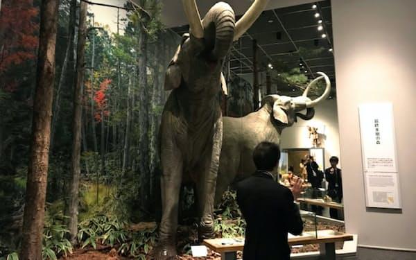 国立歴史民俗博物館(千葉県佐倉市)は「先史・古代」展示を36年ぶりにリニューアルした
