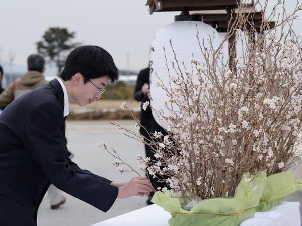 追悼行事で早く開花させた桜の花を供える宮城県農業高校の生徒(10日、宮城県岩沼市)