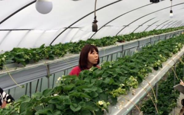 環境モニタリング装置とカメラを設置し、ビニールハウス内の栽培環境を最適化する(千葉県山武市)