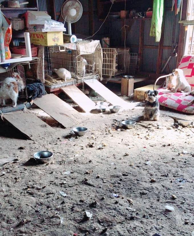動物保護施設に県が改善命令 茨城 排せつ物放置 日本経済新聞