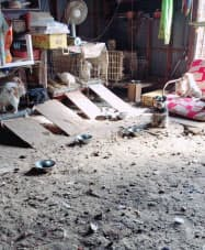 NPO法人が運営する茨城県古河市の動物保護施設の内部。排せつ物が放置された場所で、犬や猫が飼育されていた(2017年秋ごろ)=共同