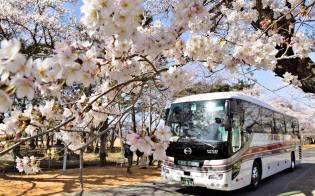 見ごろを迎えた福島県富岡町夜の森地区の桜並木を走る「お花見」用のバス。町民らが車窓から桜の風景を楽しんだ(6日)=共同