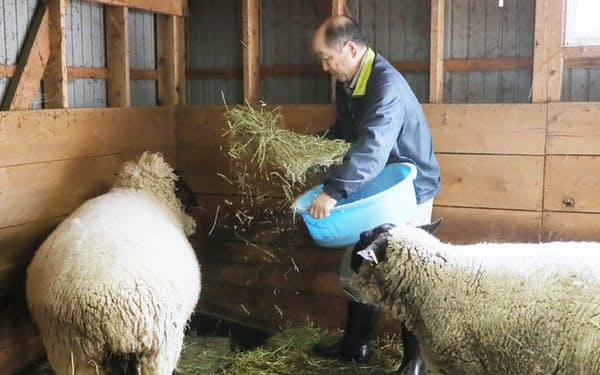 福島県大熊町の中屋敷地区で綿羊を飼育する三津間義一さん(10日午前)