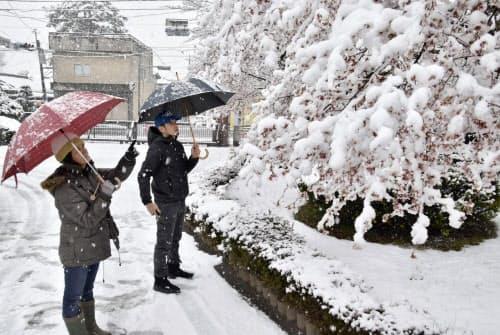 山梨県富士吉田市内で桜の木に積もった雪(10日午前)=共同