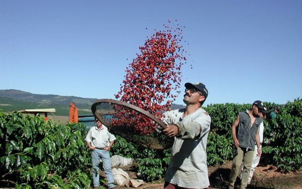 最大生産国のブラジルでは2018年の収穫量が過去最高水準に