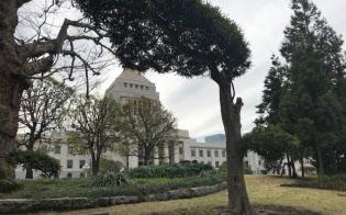 千葉県はマキの木。奥には国会議事堂がのぞく